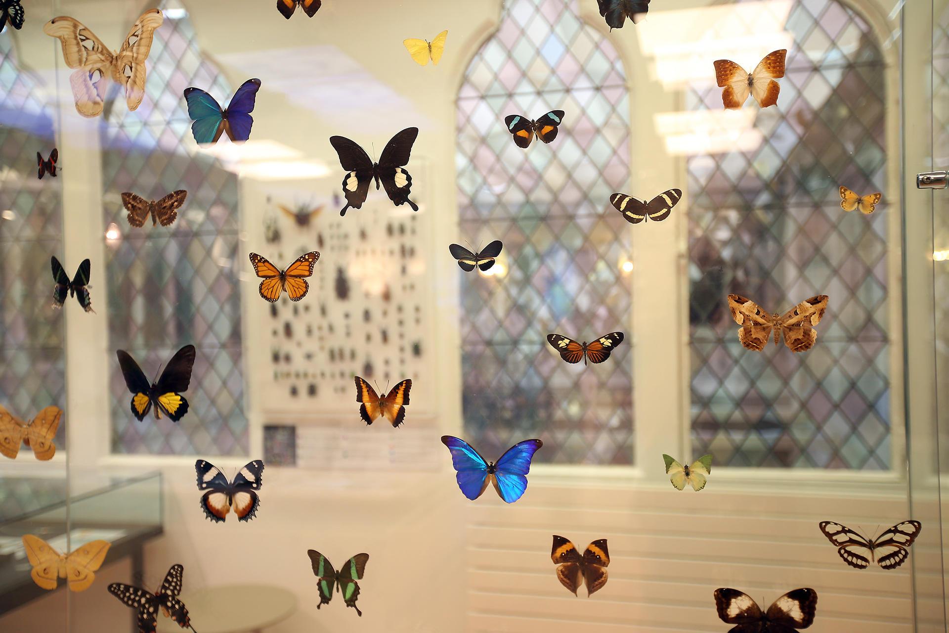 Nouveau Musee Des Papillons Saint Quentin Site Internet
